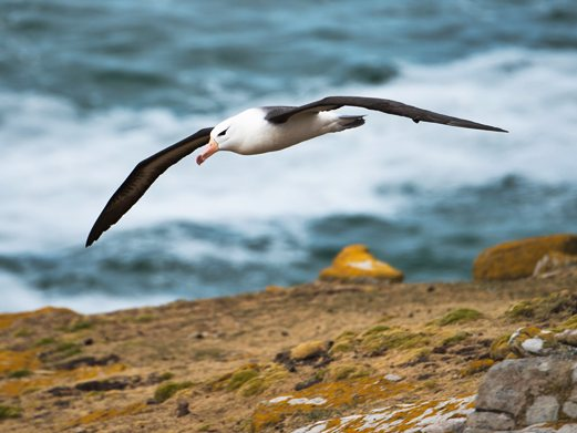 Click to see the birds of Antarctica