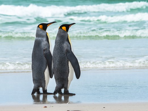 Click to follow the Penguins