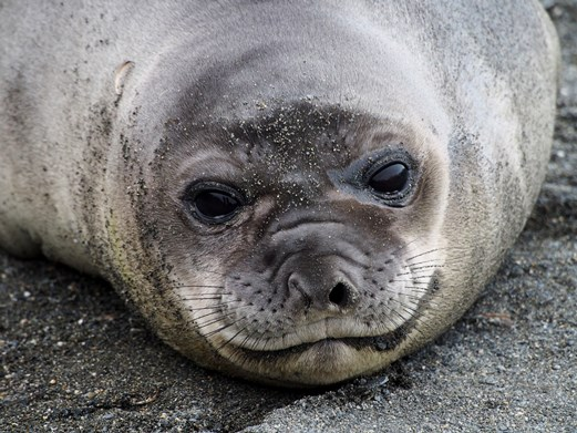 Click to follow the Seals