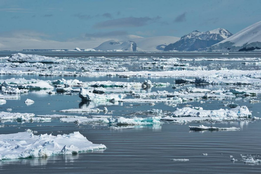 We arrive in the Weddell sea