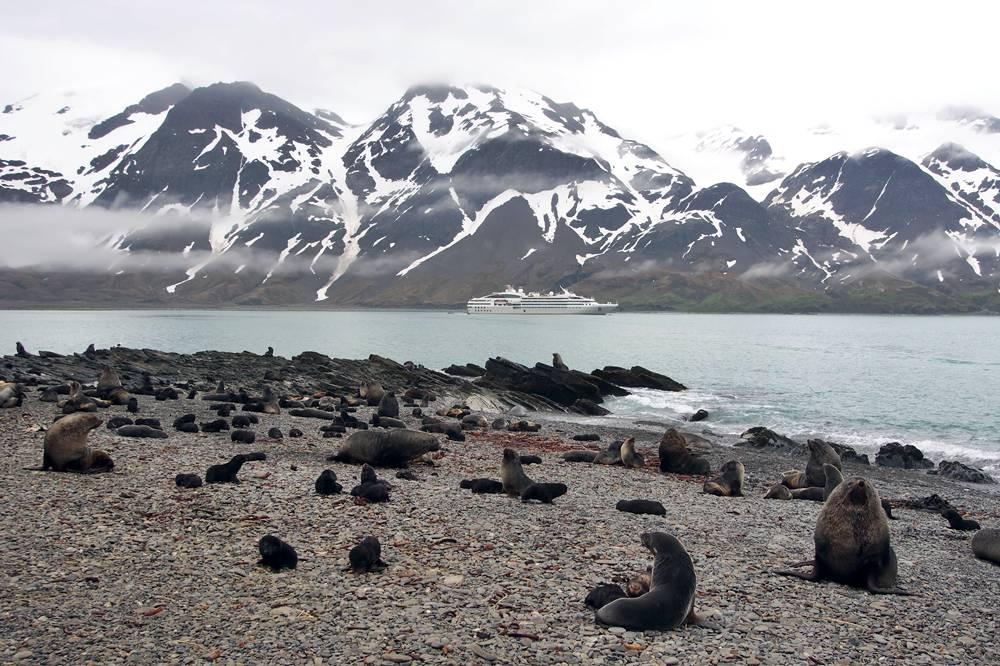 Landing among the seals at Fortuna Bay