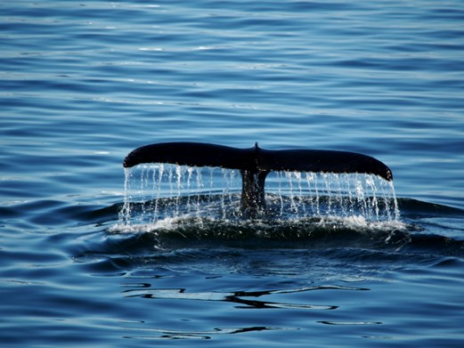 Click to follow the Whales